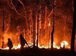 使命召唤:现代战争为澳洲大火上线慈善包