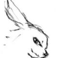 漫画兔app