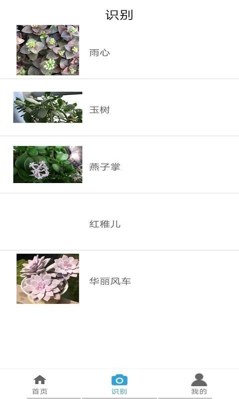桃桃识植物